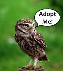 Adopt one of our birds!